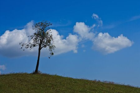 One tree and blue sky photo