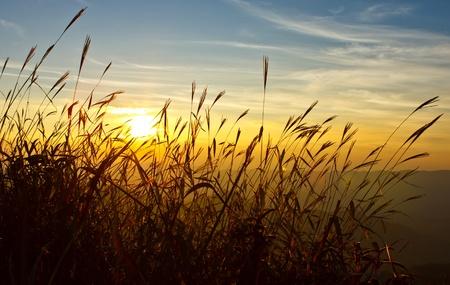 Sunset behind grass