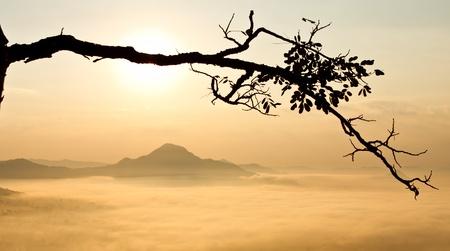Sunrise over misty valley