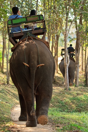 Elephant riding in north of Thailand photo