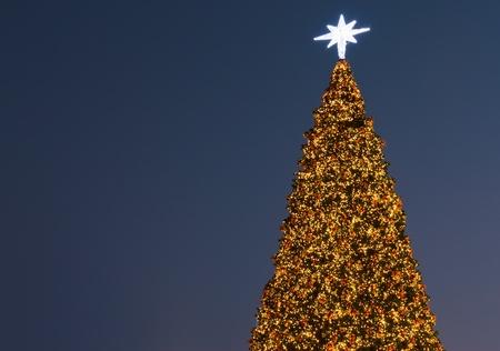 Christmas tree taken at twilight photo