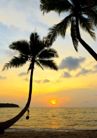 Coconut tree and sunset photo