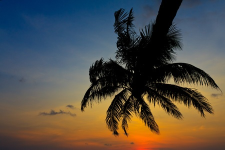 Coconut tree and sunset Stock Photo - 13193326