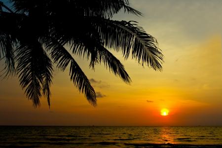 coucher de soleil: Cocotier et le coucher du soleil Banque d'images