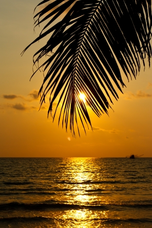 Coconut tree and sunset