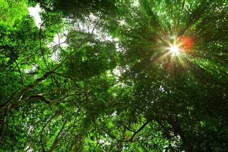the through: Sun ray over tropical forest Stock Photo
