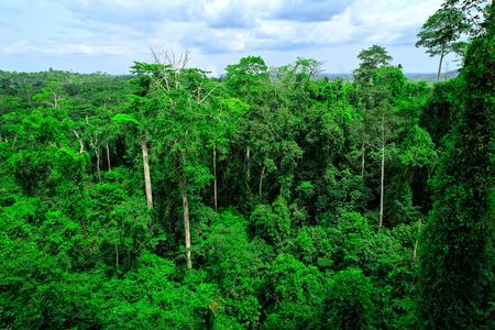Green forest in Kakum National Park, Ghana Standard-Bild