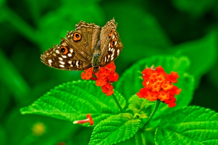 Butterfly and flowers with green leafs Stock Photo - 9440195