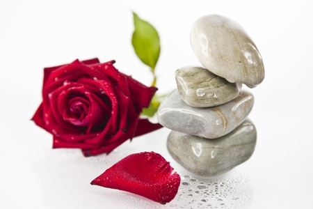 Pile rocks and red rose shallow focus  isolated on whited background