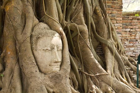 banyan tree: Ancient Buddhism head in root of banyan tree in Thailand Stock Photo