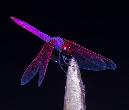 Dragonfly on black background in macro mode photo