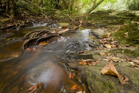 Streams in the forest with wide lens low angle photo