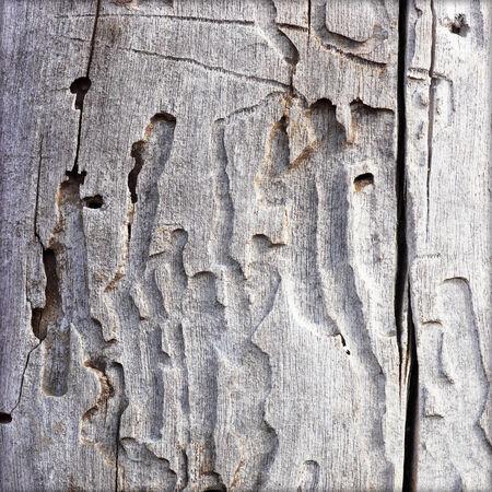 walnut tree: Old Wooden Background
