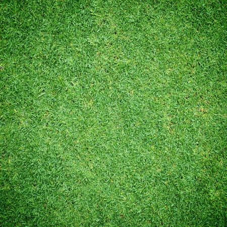 Beautiful fresh green grass texture background