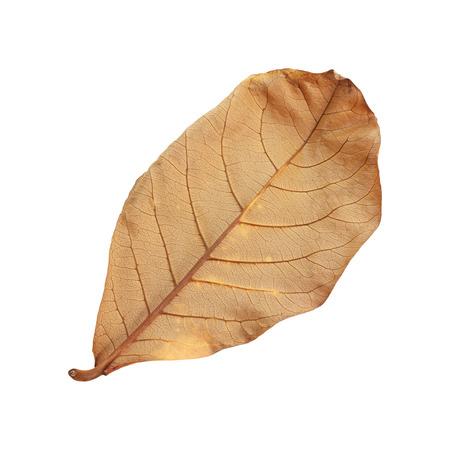 droog blad geïsoleerd op een witte achtergrond.