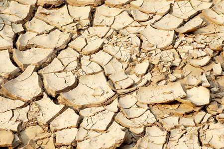 aridness: Cracked earth background