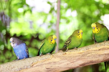 perico: Perico colorido descansando en la rama del árbol