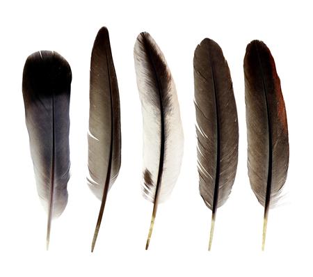 waft: feathers isolated on white background