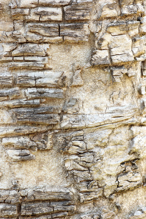 tree bark: tree bark texture background Stock Photo