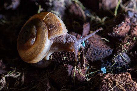 Snail on plant pot