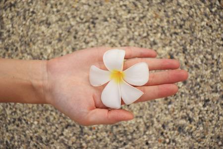 白い花を手に