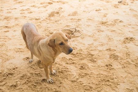 cute dog on the beach.