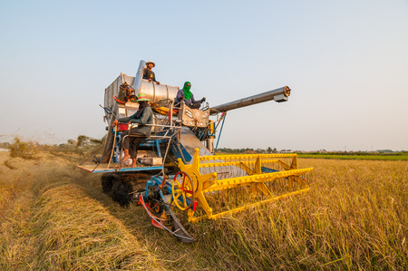 BANGKOK, THAILAND - MARCH 1 : Unidentified farmer harvesting rice in paddy field with harvest car on March 1, 2014 in Nong Chok, Bangkok, Thailand.