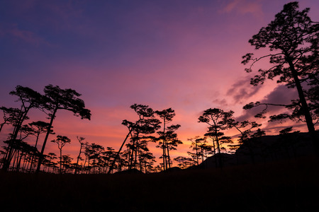 soi: silhouette of pine tree at sunset, phu soi dao national park, thailand