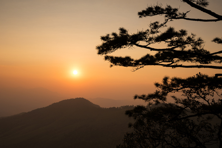 dao: silhouette of pine tree at sunset, phu soi dao national park, thailand