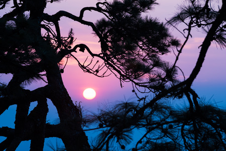 soi: silhouette of pine tree at twilight, phu soi dao national park, thailand Stock Photo