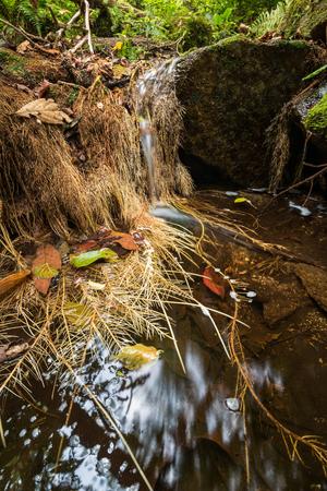 raices de plantas: corriente que fluye el agua sobre las rocas en un pequeño cae con raíces de las plantas