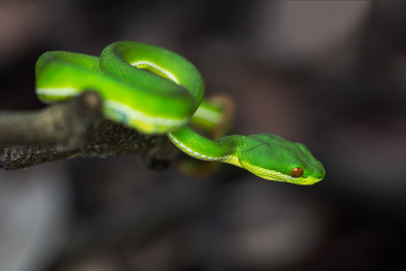 green snake on branch in rain forest