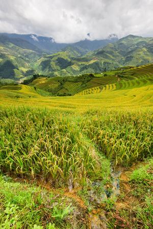 Beautiful landscape rice fields on terraced of Mu Cang Chai, YenBai, Vietnam