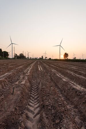 Cassava from the beginning of planting with wind turbine power generator at sunset