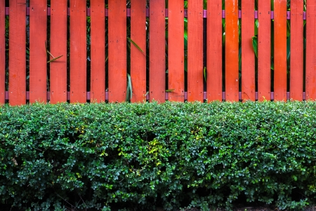 orange wall wood with garden photo