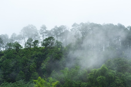 An early morning view of the temperate rain forest thailand photo