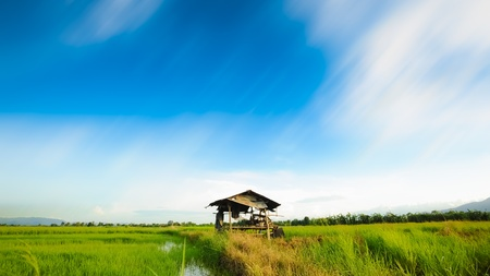 Amazing bule sky with little hut at rice paddy fields.Thailand photo