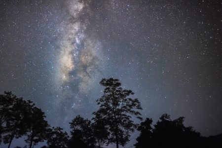 Night sky with milky way at forest photo