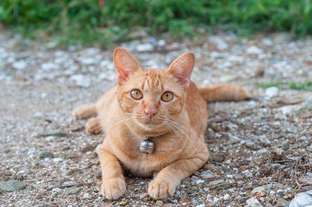 Yellow cat on the ground photo