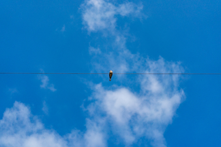 Dove hang on to electric single cable line alone in the clear sky.
