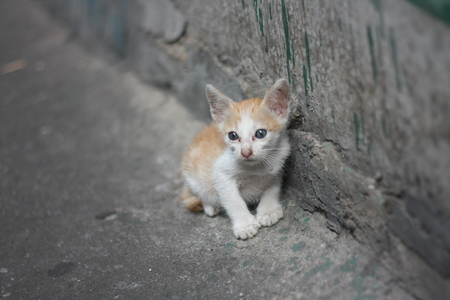 poor alone white orange kitty cat without mom standing beside the dirty wall near by canal.