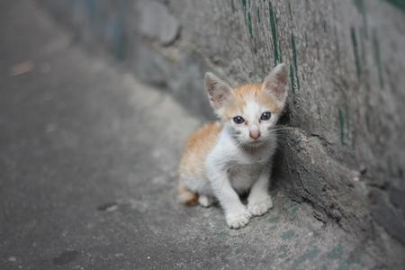 pobre gatito blanco naranja solo sin mamá de pie junto a la pared sucia cerca del canal.