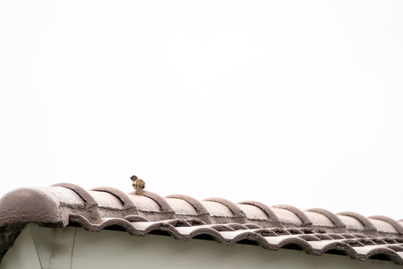 Eurasian tree sparrow backside and hang on to rooftop alone. Фото со стока