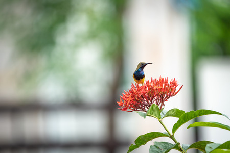 the little tiny bird is standing and eating carpel of red spike flower. Stok Fotoğraf