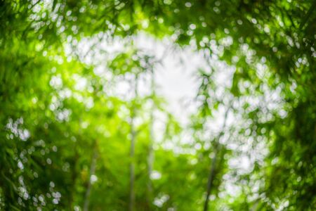 blurry a lot of bamboo tree branches and leaves with beautiful bokeh for any nature green background. Stock fotó