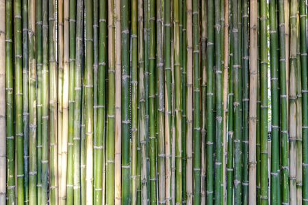 Bamboo background and backdrop battens are arranged to the wall partition and fence in the morning with sunlight. Zdjęcie Seryjne