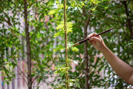 conceptual of drawing and painting from the close up Asia brush to the nature in outdoor field. Stockfoto
