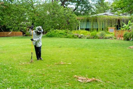 Gardener sweeps dried bamboo leaf on the grass field in the garden.