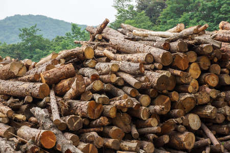 Wood cut logs are arranged in the outdoor field, prepared to the next factorial process. 免版税图像