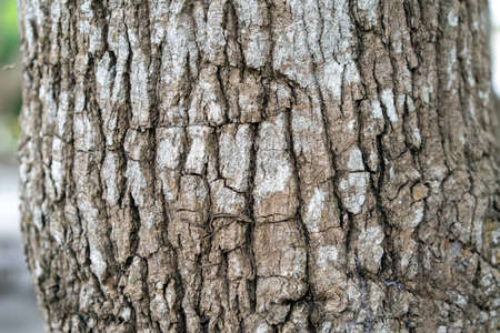 close up to the Bark of the tree 免版税图像